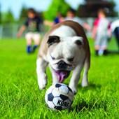 Brinquedo Kong Sport Balls para Cães G